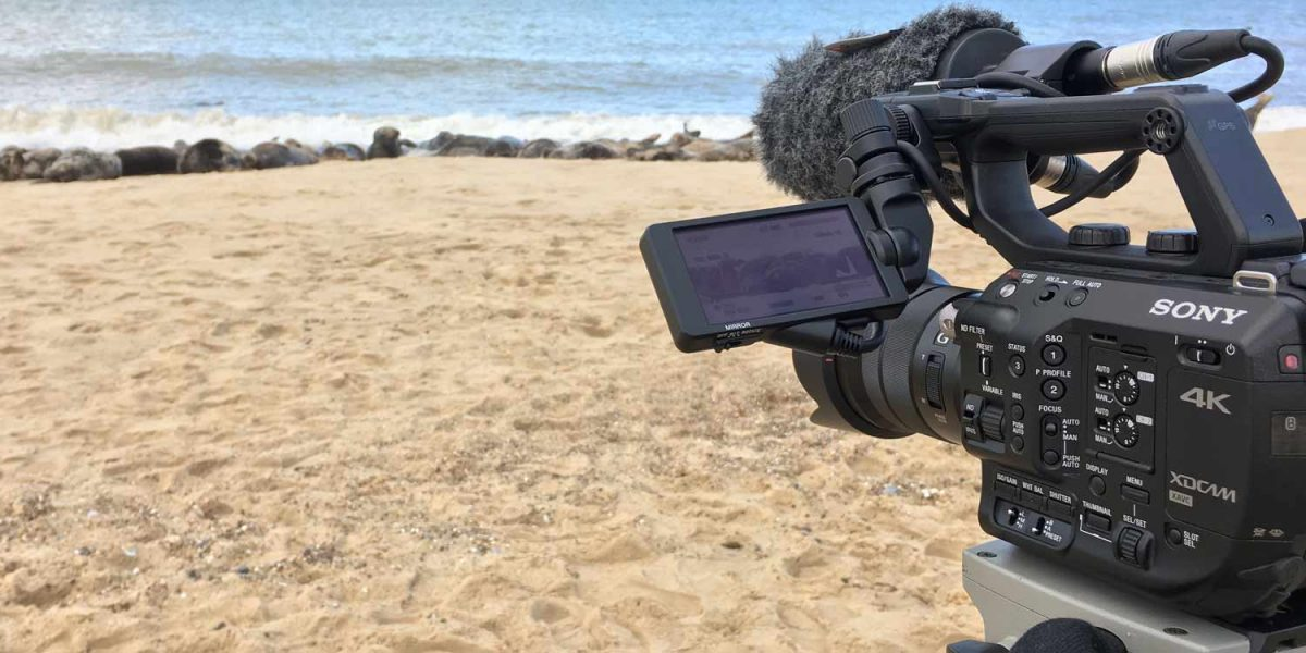 Filming wild seals on a North Norfolk beach